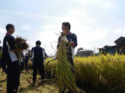 20120924_rice1.jpg