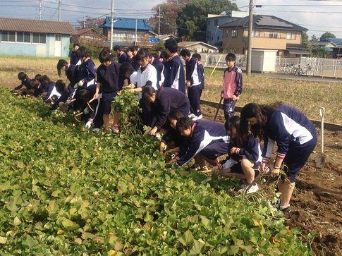 20121112_imohori.jpg