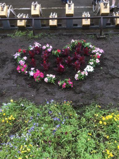 20210619 flowers1.jpg