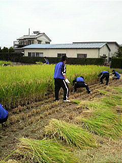 Rice%20Washimiya.jpg